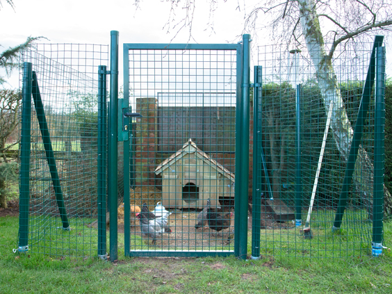 intermediate-cage-for-chickens