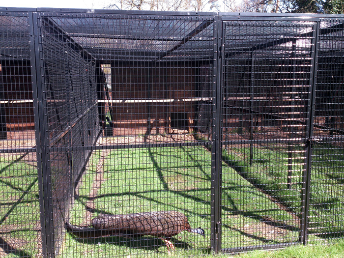 Image of Cages at Zoo