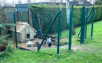 Intermediate chicken run for free ranging birds